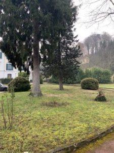 investir dans l'ancien-parc du château espaces verts arbres ciel couvert